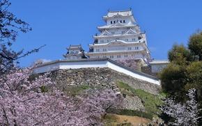 Picture castle, spring, Japan, Sakura, Himeji