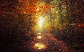 Wallpaper autumn, leaves, fog, pathway, autumn colors, path, mist, fall, foliage, fall colors, trail way, ponds