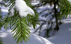 Wallpaper macro, branch, needles, snow, winter, needles