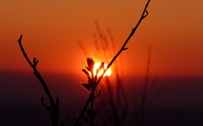Picture the sky, the sun, sunset, plant, silhouette
