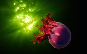Picture sea, water, glare, Medusa, underwater world, Wallpaper from lolita777