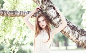 Picture girl, tree, sweetheart, birch, handle, beautiful, long-haired, Alexander Salihovic