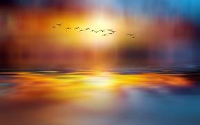 Picture birds, lake, style, paint, the world, pack, fabulous, Josep Sumalla