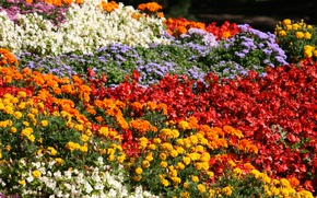 Picture Spring, Flowers, Spring, Flowering, Flowering