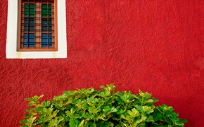 Picture greens, wall, Bush, window, red