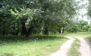 Picture road, summer, path, Kuban, Willow