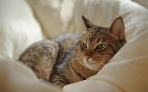 Wallpaper cat, cat, stay, bed, lying
