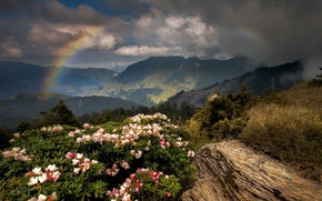 Picture flowers, mountains, rainbow
