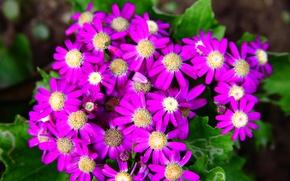 Picture nature, petals, garden, meadow, flowerbed