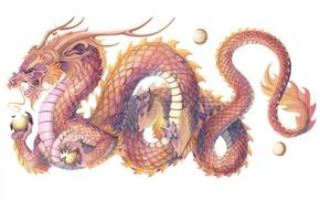 Wallpaper dragon, scales, symbol