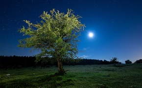 Picture field, the sky, grass, stars, light, night, tree, The moon