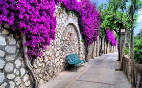 Picture trees, flowers, city, the city, benches, trees, street, beautiful, flowers, beautiful, italy, bench, streets, Italy