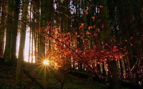 Picture autumn, forest, leaves, the sun, rays, trees, slope