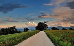 Picture road, trees, hills, field, Maki, the evening