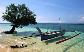 Picture Tree, Beach, Boat
