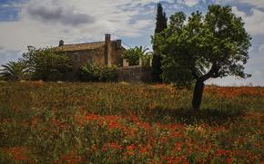 Picture flowers, house, tree, Maki, meadow, Spain, Spain, Montuiri, Majorca, Montuiri, Mallorca