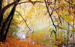 Picture autumn, leaves, trees, lake, Park, calm