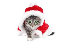 Wallpaper kitty, white background, new year