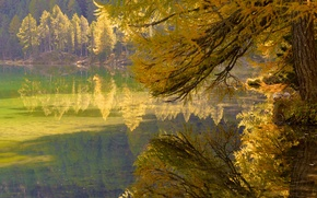 Picture autumn, forest, leaves, trees, lake, branch
