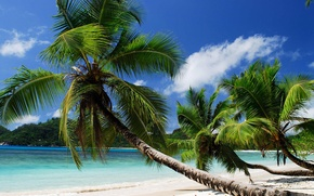 Picture sand, sea, the sky, palm trees