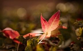 Picture autumn, sheet, bokeh