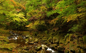 Picture autumn, forest, leaves, trees, stream, stones, moss, the bushes