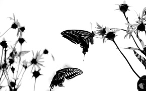 Wallpaper white, butterfly, attitude
