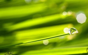 Picture grass, macro, Wallpaper, the Wallpapers, a drop of dew, reflection in the dew drop, closeup