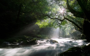 Wallpaper forest, the sun, rays, light, trees, nature, river, stream, morning