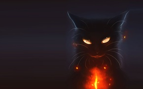 Picture cat, night, holiday, art, Halloween
