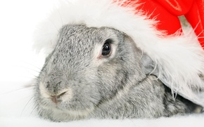 Wallpaper HAT, RABBIT, FACE, ANIMALS, RED