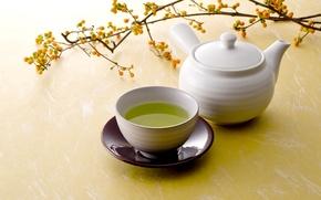 Picture green, tea, branch, Cup, saucer, Green Tea