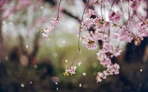 Picture flowers, spring, petals, Trees, flowering