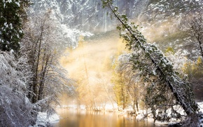 Picture winter, forest, light, trees, nature, fog, river, photo