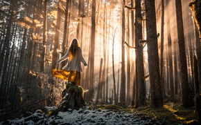 Picture forest, girl, rays, light