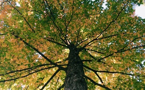 Picture autumn, the sky, leaves, tree, trunk, crown
