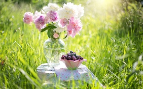 Picture summer, grass, flowers, nature, berries, vase, still life, cherry, peonies