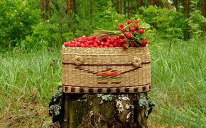 Wallpaper stump, basket, strawberries