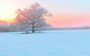 Picture winter, frost, snow, sunset, fog, tree, the evening