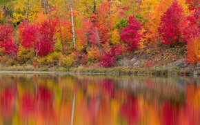 Wallpaper autumn, forest, leaves, trees, reflection, river, shore, the crimson