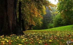 Picture autumn, forest, fairy forest