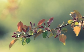 Picture flowers, spring, Bud, Apple