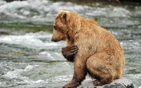 Picture water, river, stones, animal, predator, bear, prayer, Mariia Fomenko