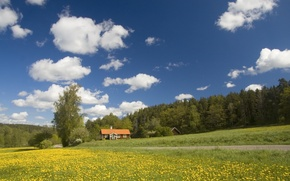 Picture road, field, forest, houses