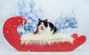 Wallpaper cat, green-eyed, funny, new year, face, cat's tale, Christmas, snow, portrait, red, lies, cat, scarf, ...