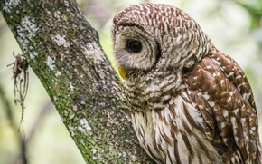 Picture tree, owl, profile