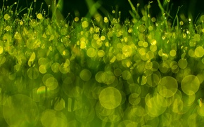 Wallpaper Rosa, macro, green, bokeh, grass