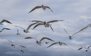 Picture sea, water, stay, seagulls