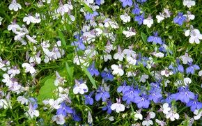 Picture flower, grass, flowers, widescreen, Wallpaper, wallpaper, widescreen, background, the Wallpapers, full screen, HD wallpapers, widescreen, …