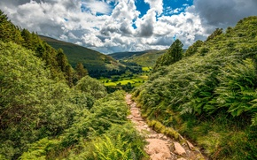 Picture greens, clouds, trees, mountains, field, valley, slope, fern, path, the bushes, hill